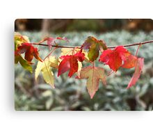 Hung Out to Dry Canvas Print