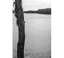 Trunk by Lake - Lennox Head Photographic Print