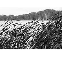 The Long Reeds - Lennox Head Photographic Print
