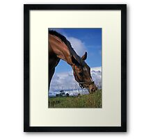 Portrait of a horse. Framed Print