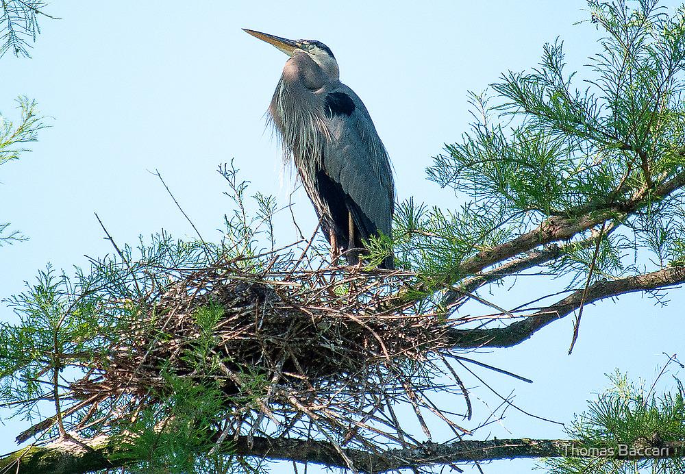 Supreme Ruler of the Nest by imagetj
