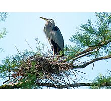 Supreme Ruler of the Nest Photographic Print