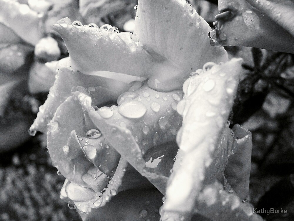 Raindrops on Roses VII by KathyBurke