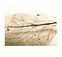 The detail is in the decay Art Print