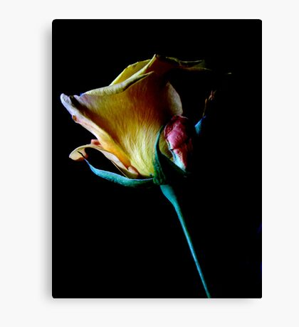 A Rose For Thee Canvas Print