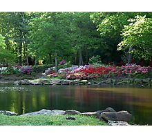 Azaleas At The Pond Photographic Print