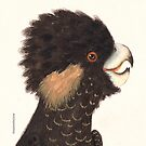 Yellow-tailed Black Cockatoo by madewithslnsw