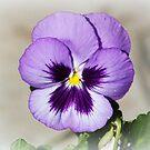 Perfect Petals by rasnidreamer