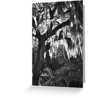 Spanish Moss Greeting Card