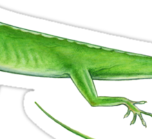 Green Anole Lizard Sticker