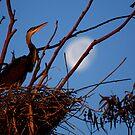 """""""  Full Moon Rising  2  """" by fortner"""