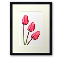 Red Tulip Trio Framed Print