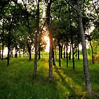 Sunrise Through the Trees - Pecan Grove Park, Sherman, Texas by aprilann