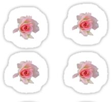 24 pink roses Sticker