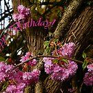 Plumtree blossom by Gilberte