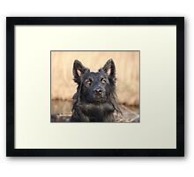 Alert and concentrated! Framed Print