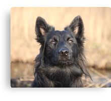 Alert and concentrated! Canvas Print