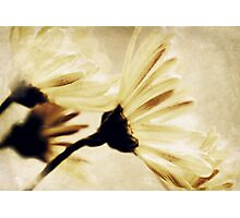Ethereal Beauty Photographic Print