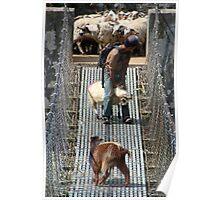 Goats on Suspension Bridge Tikhedhunga  Poster
