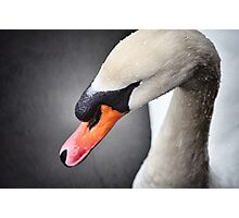 Mr Swan Photographic Print