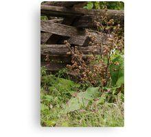 Landis Valley Split Rail Fence II Canvas Print