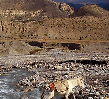 Horse Crossing River near Jomsom by SerenaB