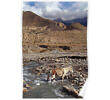Horse Crossing River near Jomsom Poster