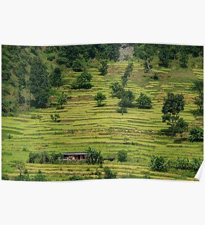 House Amongst Rice Fields near Birethanti Poster