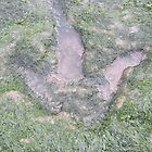 dinosaur footprint isle of skye by jmnicolson