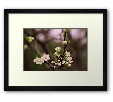 plum tree in full bloom Framed Print