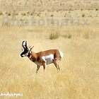 The grazing antelope by Erykah36