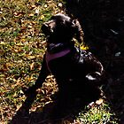 Daisy 5 months by KSKphotography