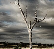 Dead Tree (Bonshaw, NSW) by Julia Ott