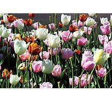 Bunch-O-Tulips Photographic Print