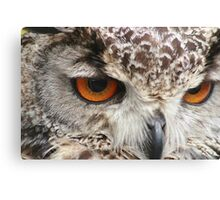 Owls Eyes Canvas Print