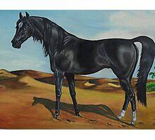 The Black Stallion Photographic Print