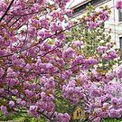 Jersey City, New Jersey, Spring Flowers by lenspiro