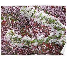 Jersey City, New Jersey, Spring Colors Poster