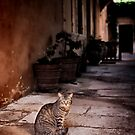 Cat In Monastery by Graham Prentice
