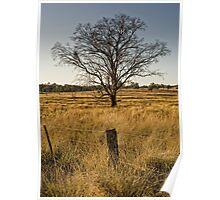 Paddock  (Bonshaw, NSW) Poster