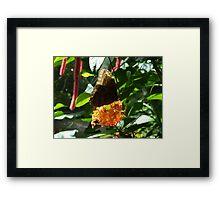 Owl Butterfly on Bright Orange Flower Framed Print
