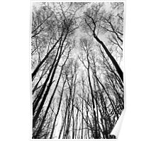 English Forest Trees Digital art Poster