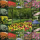 Kaleidoscope of Colours - Keukenhof Collage by MidnightMelody