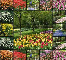 Kaleidoscope of Colours - Keukenhof Collage by MidnightMelody