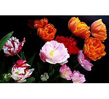 Dutch Tulips Photographic Print
