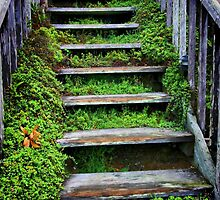 Weathered Stairway by Barbara  Brown