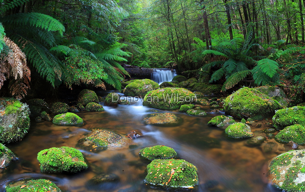 Tranquillity on Koala Creek by Donovan wilson
