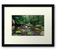 Tranquillity on Koala Creek Framed Print