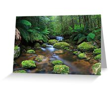 Tranquillity on Koala Creek Greeting Card