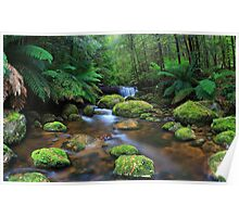 Tranquillity on Koala Creek Poster